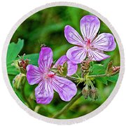 Wild Geranium On Trail To Swan Lake In Grand Teton National Park-wyoming Round Beach Towel