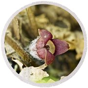 Wild Ginger Wildflower - Asarum Canadense Round Beach Towel