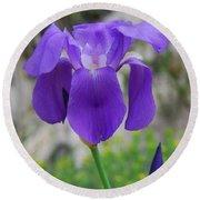 Wild Growing Iris Croatia Round Beach Towel