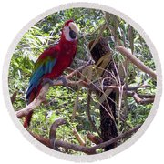 Wild Hawaiian Parrot  Round Beach Towel