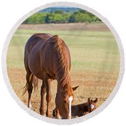 Wild Horses Mother And Baby Round Beach Towel