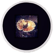Wild Mushroom New Hampshire I Round Beach Towel