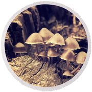 Wild Mushrooms Round Beach Towel by Amanda Elwell