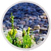 Wild Snapdragons  Round Beach Towel