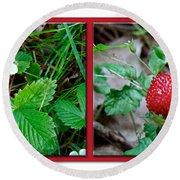 Wild Strawberry Plant - Fragaria Virginiana Round Beach Towel