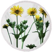 Wild Sunflowers Round Beach Towel