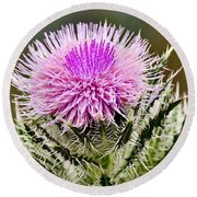 Wild Thistle  Round Beach Towel