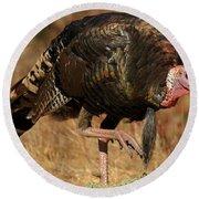 Wild Turkey Round Beach Towel by Adam Jewell
