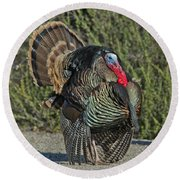 Wild Turkey Tom Round Beach Towel
