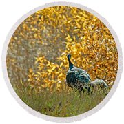 Wild Turkeys And Fall Colors Round Beach Towel