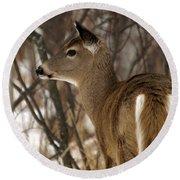 Wild White-tailed Deer Round Beach Towel
