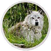 Wild Wolf Round Beach Towel