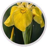 Wild Yellow Iris Round Beach Towel
