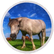 Wild Young Horse On The Field Round Beach Towel