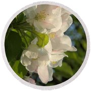 Wildf Apple Blossoms Round Beach Towel