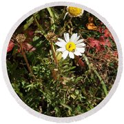 Wildflower @ Kit Carson Round Beach Towel