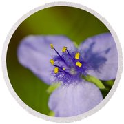 Wildflower 1 - Botanical Photography By Sharon Cummings Round Beach Towel