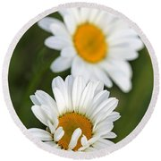 Wildflower Named Oxeye Daisy Round Beach Towel