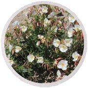 Wildflowers - Desert Primrose Round Beach Towel