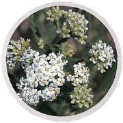 Wildflowers - White Yarrow Round Beach Towel