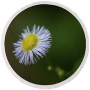 Willow Aster Round Beach Towel