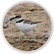 Wilsons Plover At Nest Round Beach Towel
