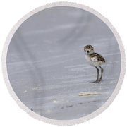 Wilson's Plover Chick Photo Round Beach Towel