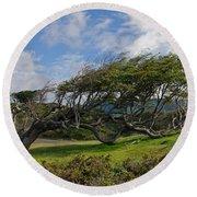 Wind-bent Tree In Tierra Del Fuego Patagonia  Round Beach Towel