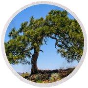 Lonesome Pine Tree Round Beach Towel