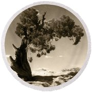 Wind Swept Tree Round Beach Towel