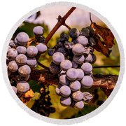 Wine Grapes On The Vine Round Beach Towel