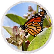 Wings Up Monarch Butterfly By Diana Sainz Round Beach Towel
