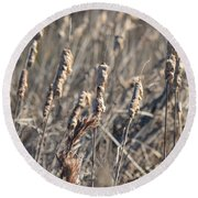 Winter Cattail Abstract Round Beach Towel