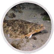 Winter Flounder Round Beach Towel
