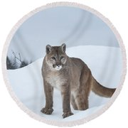 Winter Mountain Lion  Round Beach Towel