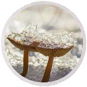 Winter Mushrooms Round Beach Towel