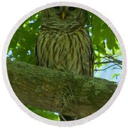 Winter Park Owl Round Beach Towel