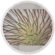 Winter Pasque Flower Round Beach Towel