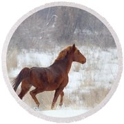 Winter Proud Round Beach Towel by Mike  Dawson