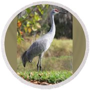 Winter Sandhill Crane Round Beach Towel