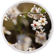 Winter Spring Almond Flowers Round Beach Towel