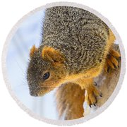 Winter Squirrel Round Beach Towel
