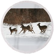 White Tailed Deer Winter Travel Round Beach Towel