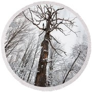Winter Tree Perspective Round Beach Towel
