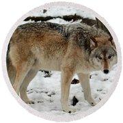 Winter Wolf In The Snow Round Beach Towel