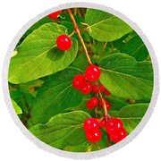 Winterberry Along Rivier Du Nord Trail In The Laurentians-qc Round Beach Towel
