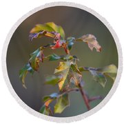 Winter's Oak Sapling Round Beach Towel