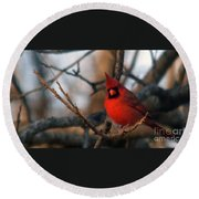 Northern Cardinal Red Beauty  Round Beach Towel
