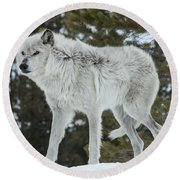 Wolf - Discovery Round Beach Towel