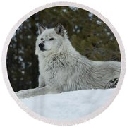 Wolf - Peaked Interest Round Beach Towel